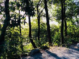Foto Terreno en Venta en  Bosques de San Angel Sector Palmillas,  San Pedro Garza Garcia  TERRENO EN VENTA EN BOSQUES DE SAN ANGEL SECTOR PALMILLAS