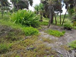 Foto Terreno en Venta en  Mahahual,  Othón P. Blanco               En Venta Terreno frente la playa en   Xcalac , Costa Maya, C2650