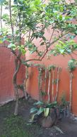 Foto thumbnail Casa en Alquiler en  Barrio Parque Leloir,  Ituzaingo  Lorenzo caro al 4600