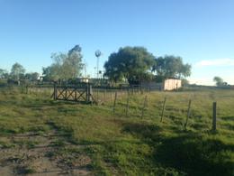 Foto Campo en Venta en  Las Flores,  Las Flores  Las Flores a 1,7 km del pavimento y al 100