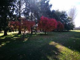 Foto Campo en Venta en  Chascomus ,  Interior Buenos Aires  12 HA. CHASCOMUS