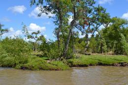 Foto Terreno en Venta en  Urion,  Zona Delta Tigre  Urion Parcela 41