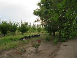 Foto Campo en Venta en  General Alvear ,  Mendoza   calle Centenario, en Bowen, Mendoza