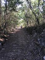 Foto Terreno en Venta en  Pueblo Sotuta,  Sotuta  Rancho en venta en Sotuta Yucatan.