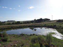 Foto Campo en Venta en  Piriápolis ,  Maldonado  Chacra en Ruta 73 casi Ruta 37 Cerro Pan de Azúcar