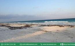 Thumbnail picture Land in Sale in  Tulum ,  Quintana Roo  Wonderful land by the sea in Boca Paila in Tulum, Quintana Roo | Blues Real | Code 927