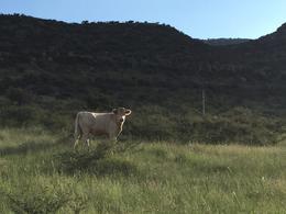 Foto Finca en Venta en  Cuauhtémoc ,  Chihuahua  Rancho ganadero en Venta, Carr Chih-Cuauhtémoc