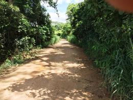 Foto Terreno en Venta en  San José Chiltepec ,  Oaxaca  Oaxaca, Tuxtepec, 34 hectáreas, Terreno Agrícola, Siembra: Caña Azucar