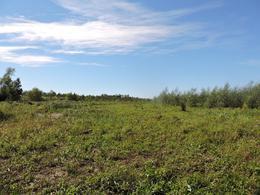 Foto Campo en Venta en  Paraná Miní,  Zona Delta San Fernando  215 ha. Paraná Miní