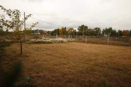 Foto Terreno en Venta en  Villa Elisa,  La Plata       442 e/ 137 y 138