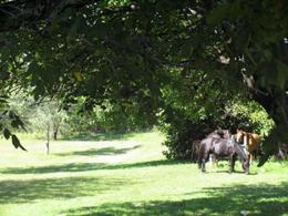 Foto Chacra en Venta en  Alta Gracia,  Santa Maria  La Paisanita
