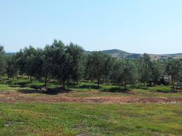 Foto Campo en Venta en  Pan de Azúcar ,  Maldonado  Camino Gerona