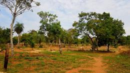 Foto Terreno en Venta en  Tarumandy,  Luque  Zona Tarumandy, Luque