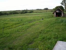 Foto Chacra en Venta en  Tala ,  Canelones  Zona hortícola, casa, riego automático