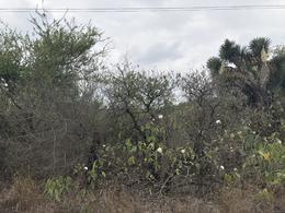 Foto Terreno en Venta en  Punta Castilla,  Salinas Victoria  Calle Fresnos Fraccionamiento Villas Campestre