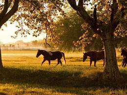 Foto Terreno en Venta en  Estancia Villa Maria,  Countries/B.Cerrado (Ezeiza)  Estancia Villa Maria