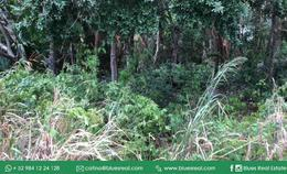 Thumbnail picture Land in Sale in  Solidaridad ,  Quintana Roo  For SALE land  in Playa del carmen in front of Playacar and near to Centro Playa | Blues Real | Code 950