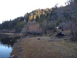 Foto thumbnail Terreno en Venta en  Cholila,  Cushamen  Lago Carlos Pellegrini, Cholila