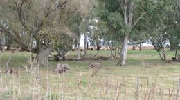 Foto Campo en Venta en  Del Carril,  Saladillo  61 ha. Del Carril Saladillo