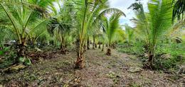 Foto Terreno en Venta en  Bacalar ,  Quintana Roo  TERRENO EN LAGUNA GUERRERO