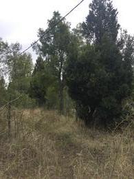 Foto Terreno en Venta en  Trevelin,  Futaleufu  Barrancas de Trevelin