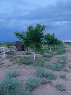 Foto Terreno en Venta en  Aldama ,  Chihuahua      NOGALERA UBICADA EN CARRETERA RUMBO AL AEROPUERTO