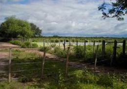 Foto Campo en Venta en  Colonia La Florida Chica,  General Guemes  Excelente Campo Agricola 200 has. Florida Chica. 14 km de Castelli