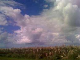 Foto Campo en Venta en  San Clemente Del Tuyu ,  Costa Atlantica  Campo Ganadero 238 Has.