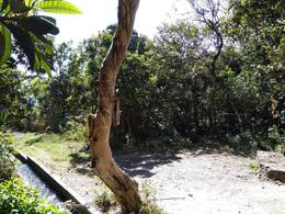 Foto Terreno en Venta en  Malinalco,  Malinalco  Terreno San Agustin Trapichito, Barrio San Andres Malinalco