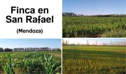 Foto Farms en Venta en  San Rafael ,  Mendoza  Finca en San Rafael - Mendoza