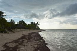 Foto Campo en Venta en  Pueblo San Crisanto,  Sinanché  Terreno frente al mar en venta Playa San crisanto Mérida Yucatan