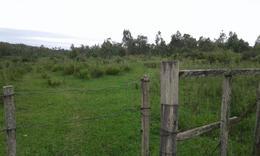 Foto Terreno en Venta en  Tacuarembó ,  Tacuarembó  LA ALDEA