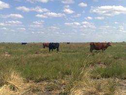 Foto Campo en Venta en  Capital Federal ,  Capital Federal  AMAMA - 4000 ha sobre ruta 1