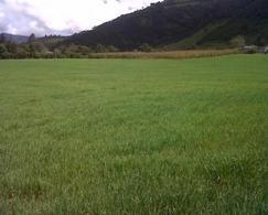 Foto Terreno en Venta en  Mitad del Mundo,  Quito  Hermoso terreno de venta . 2 Hectáreas. SAN JOSE DE MINAS $6,50 c/mt.