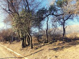 Foto Terreno en Venta en  Junin ,  San Luis  Barranca Colorada Abajo