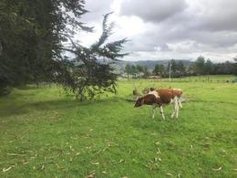 Foto Quinta en Venta en  Sur de Cuenca,  Cuenca  Cumbe