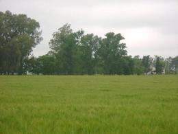 Foto Campo en Venta en  25 De Mayo,  25 De Mayo  800 Ha. 25 de Mayo