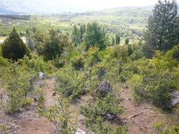 Foto Local en Venta en  El Foyel,  Bariloche  RR992