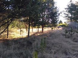 Foto Terreno en Venta en  Las Golondrinas,  Lago Puelo  Callejón Los Ñires, Las Golondrinas, Lago Puelo