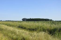 Foto Chacra en Venta en  General Belgrano,  General Belgrano  A 1 km de Ruta 29 al 100