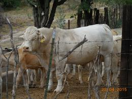 Foto Quinta en Venta en  Rancho o rancheria Tenanguillo,  Tabasco  RANCHO EN VENTA EN TABASCO, ZAC.