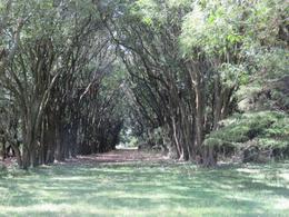 Foto Campo en Venta en  Benito Juarez,  Benito Juarez  Ruta 3 Km 401 100