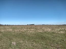 Foto Campo en Venta en  Ranchos,  General Paz  Ruta Provincial 29, Km 48 - Ranchos al 100