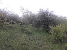 Foto Terreno en Venta en  Animi,  Colon  LOTEO de 5 Terrenos a la VENTA - La Granja / Villa Animi