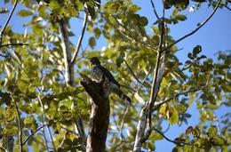Foto Terreno en Venta en  Tulum,  Tulum  Venta de terreno en Tulum.