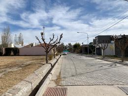 Foto Terreno en Venta en  San Martin ,  Mendoza  La Posada