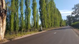 Foto Terreno en Venta en  San Rafel,  San Rafael  Ruta Nacional 146, San Rafael, Mendoza