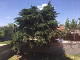 Foto Oficina en Venta   Alquiler en  Las Lomas de San Isidro,  San Isidro  URUGUAY al 3300 Cfte. 1°