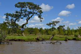 Foto Terreno en Venta en  Urion,  Zona Delta Tigre  Urion Parcelas 44 y 45