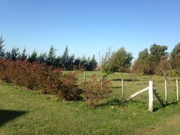 Foto Campo en Venta en  Las Flores,  Las Flores  Las Flores, a 7 km de Ruta 3 y 11 km de Ciudad